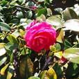 ひとつの花
