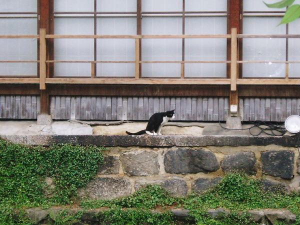 祇園のネコの思ふこと。